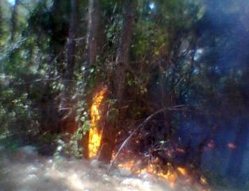 В Геленджике объявлена чрезвычайная пожароопасность