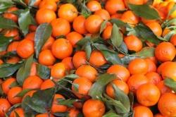 К Новому году мандарины из Абхазии могут стать дефицитом