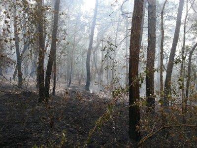 Под Дивноморском выгорело 5 га лесной подстилки